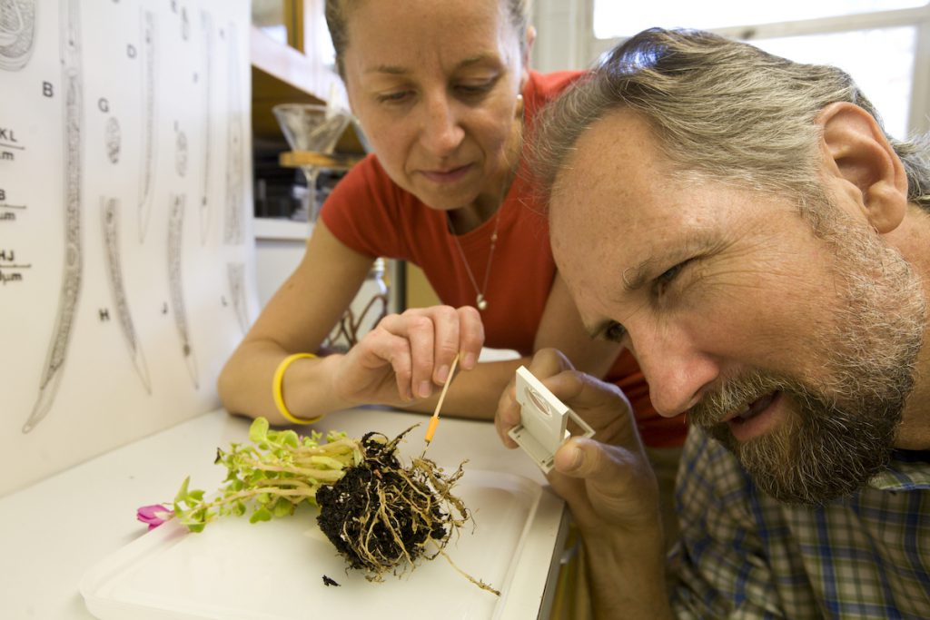 In this photo released by the University of Florida's Institute of Food and Agricultural Sciences, Dorota Porazinska, left, and Robin Giblin-Davis examine a plant's root system for signs of nematode damage at UF's Fort Lauderdale Research and Education Center -- Thursday, Feb. 26, 2009. The scientists devised a new way to analyze populations of the microscopic, wormlike creatures, which may lead to better methods of detecting and monitoring pest and beneficial nematodes in lawns, crops, conservation areas and golf courses. UF/IFAS Photo: Tyler Jones